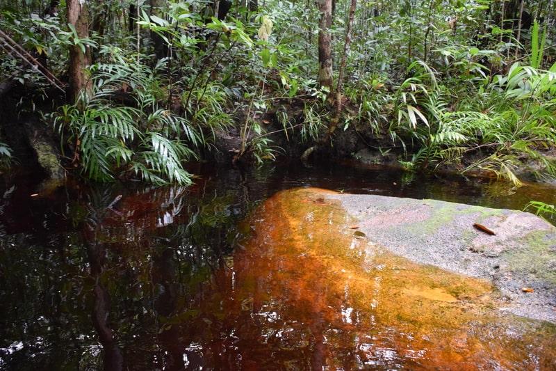 biotopo amazzonico