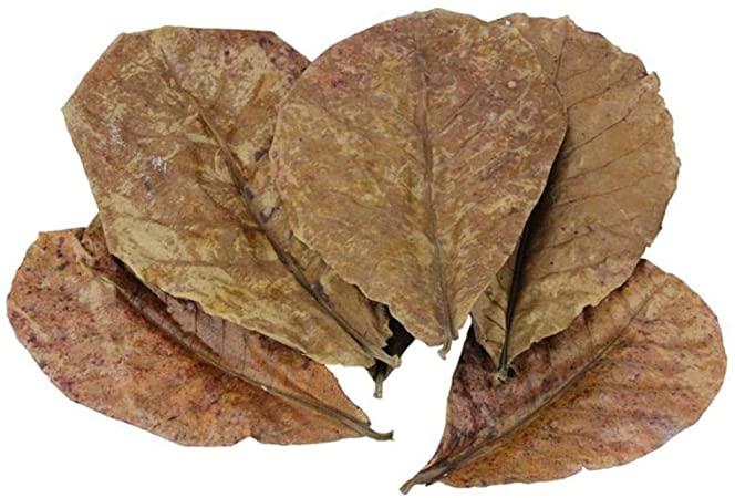 foglie di catappa