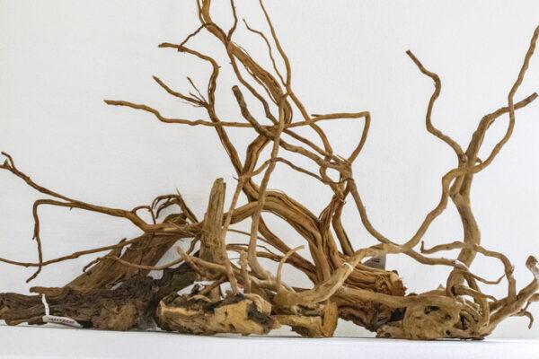 radici per acquario mangrovia redwood